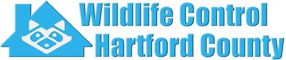 Hartford County Wildlife and Animal Removal